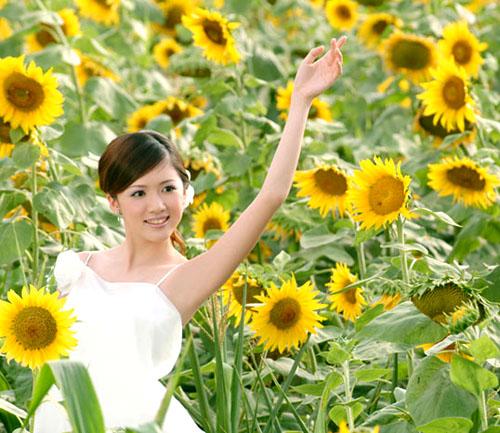 向日葵与美女【组图】