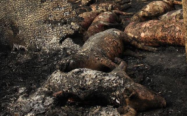 狗狗食品_美国小狗穿泰迪熊套装沙滩行视频走红组图