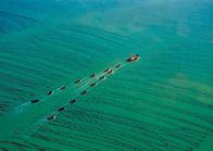 漁(yu)業圖片