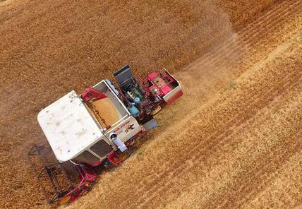 山东茌平:75万亩小麦开机收获