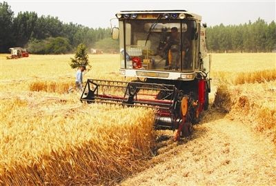 枣庄小麦开收 累计抢收小麦16.36万亩