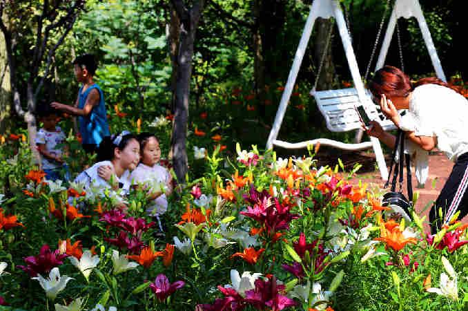濟南紅葉谷第十屆百合花節盛大開幕