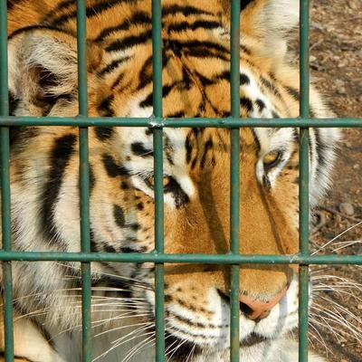 [話題]動物園危險為何沒能被杜絕?