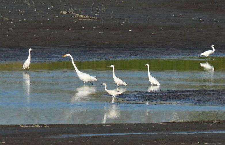 青島:漁民與候鳥繪生態美景