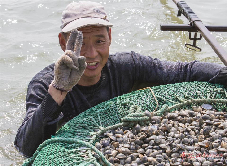 青島漁民踩高蹺挖蛤蜊