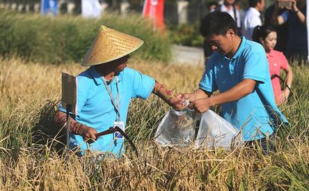 青岛:2.8亿亩盐碱地将能种庄稼