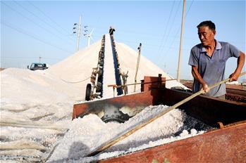 山东北海30万亩海盐进入收获季