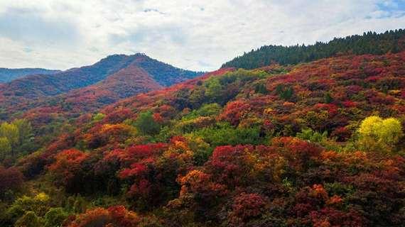 醉美深秋!瞰紅葉谷漫山紅遍層林盡染