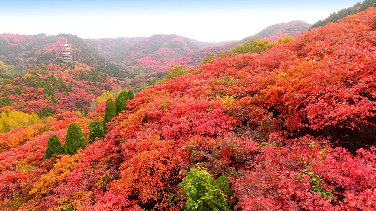 """航拍""""天然氧吧""""济南红叶谷的诗情画意"""