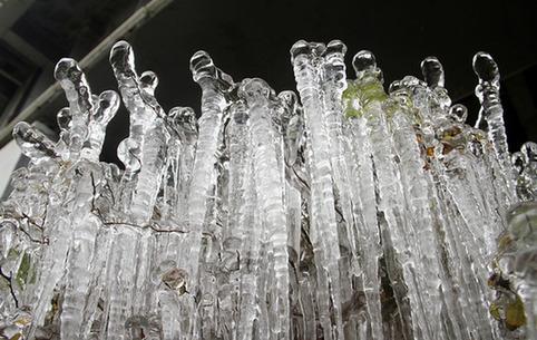 威海:街邊花草結冰挂 市民抓緊拍冬景