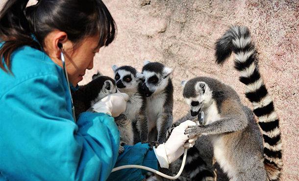 山東青島:動物體檢過寒冬