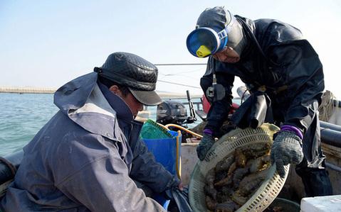 青岛:实拍冬日海底捞参人