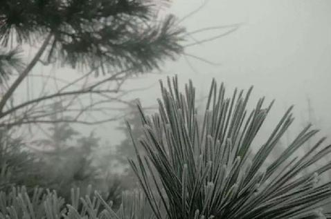 青岛迎今冬首场降雪 现雾凇美景