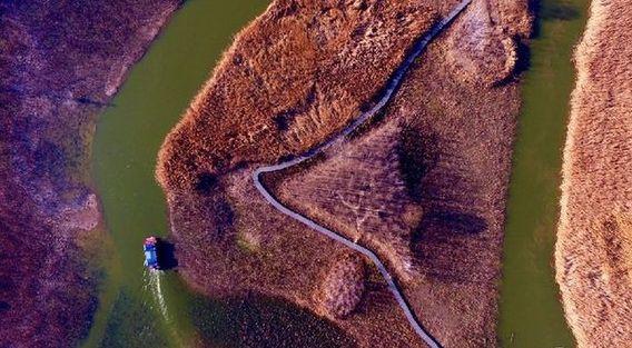 冬日台儿庄运河湿地 曲水环抱风光如画