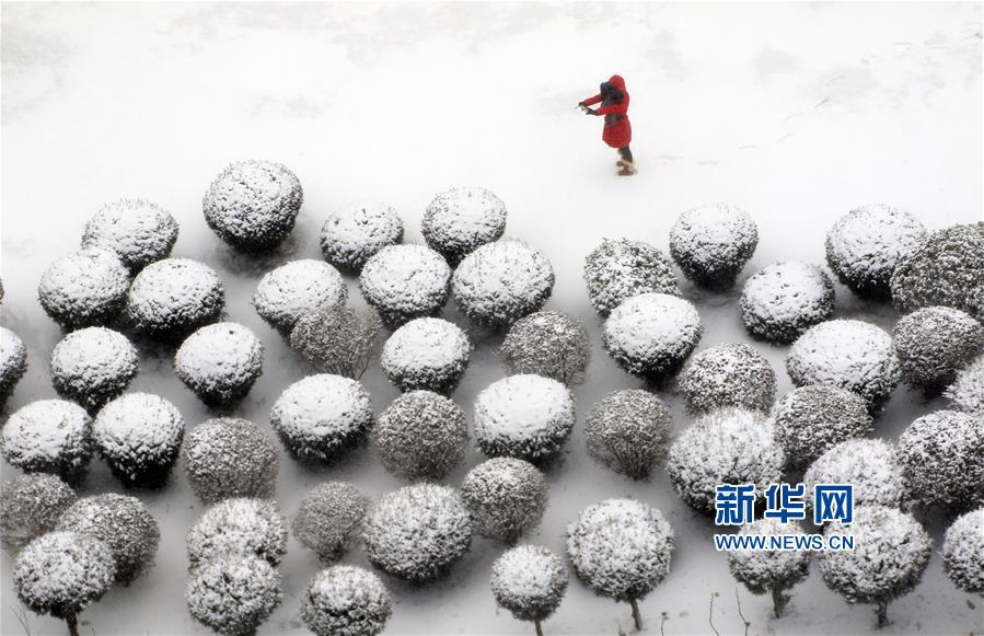 """山东烟台:雪""""蘑菇"""""""