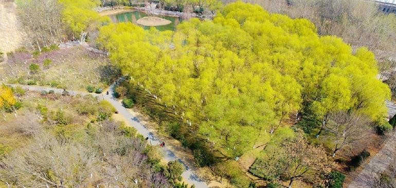 濟南植物園的春天:嫩芽吐綠森林公園