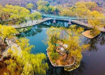航拍濟南泉城公園綠柳成蔭 春色滿園入畫來(圖)