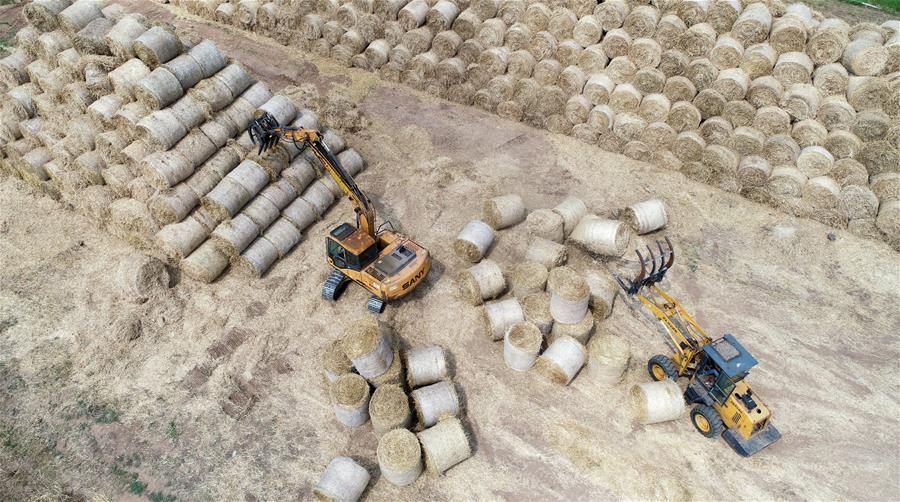 山东临沂:麦收时节 回收秸秆