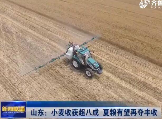 视频 山东:小麦收获超八成 夏粮有望再夺丰收