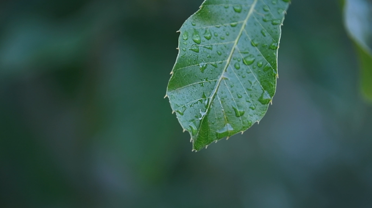 大自然最可爱的虫子:性感的肥蚕
