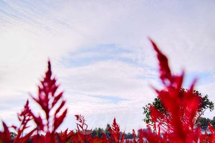 看云卷云舒 阴雨过后枣庄现晴好天气