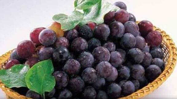 一种葡萄一种药:红葡萄软化血管白葡萄滋养肺气