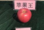 """山东沂源苹果红了 """"果王""""重1斤1两多"""
