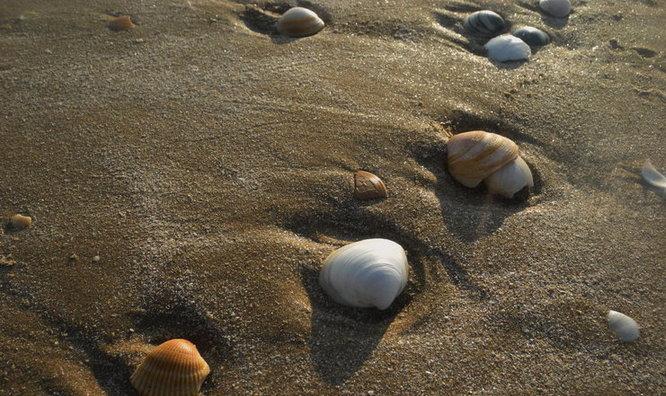 濱州現千年貝殼堤島 每年增加10萬噸