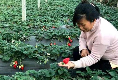 """""""草莓姐""""︰貧困戶華(hua)麗變身致富(fu)明星"""