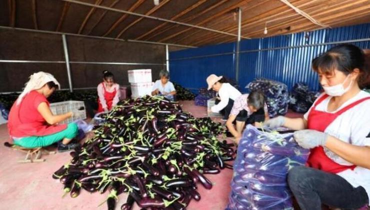 山(shan)東省壽光(guang)市蔬菜(cai)產量和(he)價格(ge)市場運行穩定