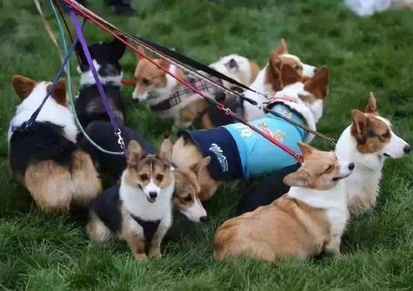 濟南:遛狗不栓繩被處罰後不改正 5年內不能養狗