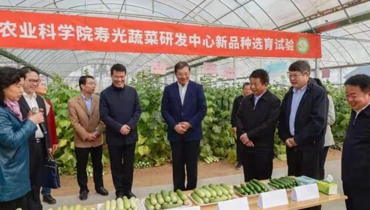 山(shan)東壽光(guang)加快蔬菜(cai)轉型升級 推動農(nong)業高質量發展