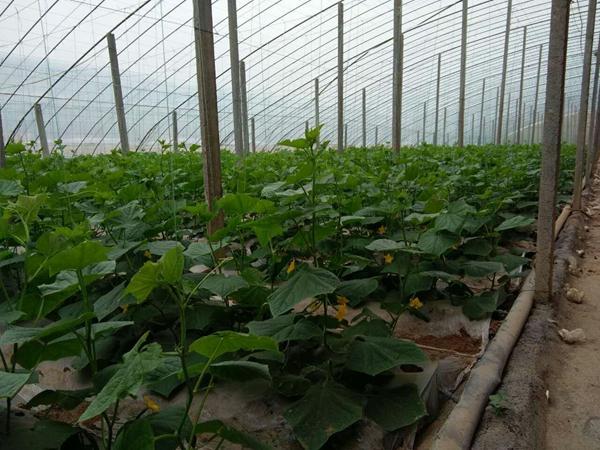 淄博市张店宏顺农业种植园