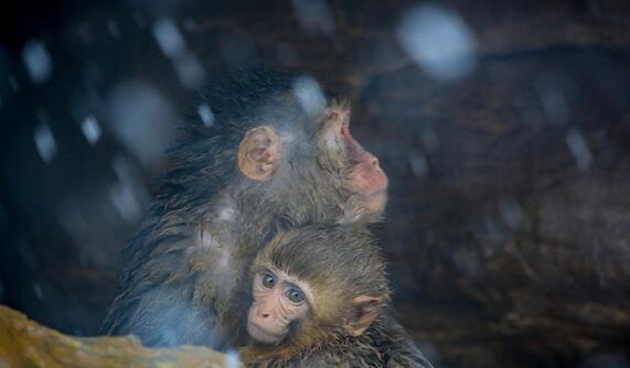 初雪飄落 樂(le)壞(huai)了(liao)動物世界(jie)的小動物們