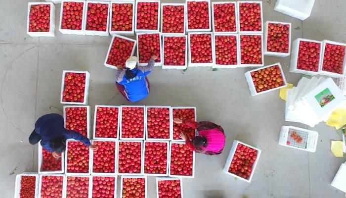 山东聊城15吨爱心蔬菜送到湖北襄阳