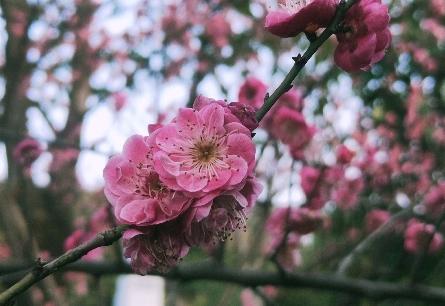 【救援日记】杏林春暖待花期,迟日江山见明丽