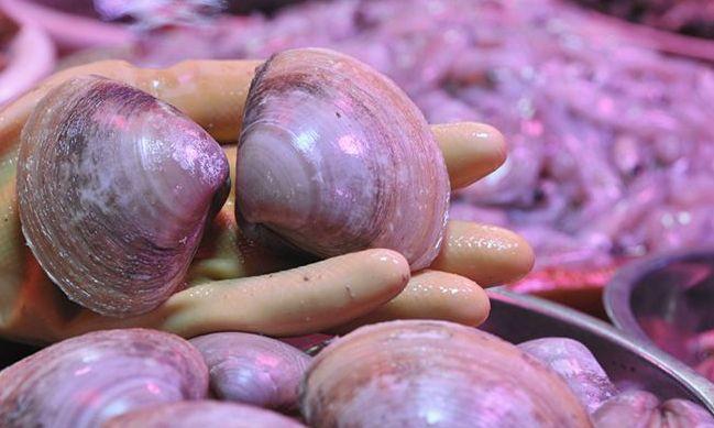 青島: 墨魚豆蠣蝦西施貝 春天的小海貨品種海多了