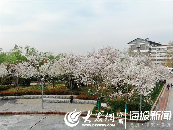"""""""百里花廊""""""""千園之城"""" 天橋(qiao)的春色惹人(ren)醉"""