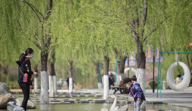 濟南槐(huai)蔭之(zhi)春(chun)如(ru)約而至