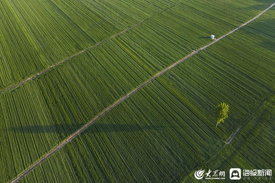 濱州︰立夏(xia)節氣 黃河(he)灘里麥田(tian)綠