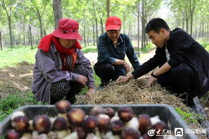 東營(ying)︰90後小伙種植cang)湎」gu)jie)忠yin)領致富(fu)路(lu)