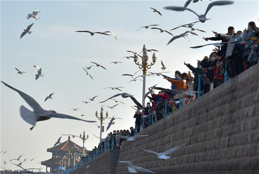 山東青島:遊客樂享海岸春天