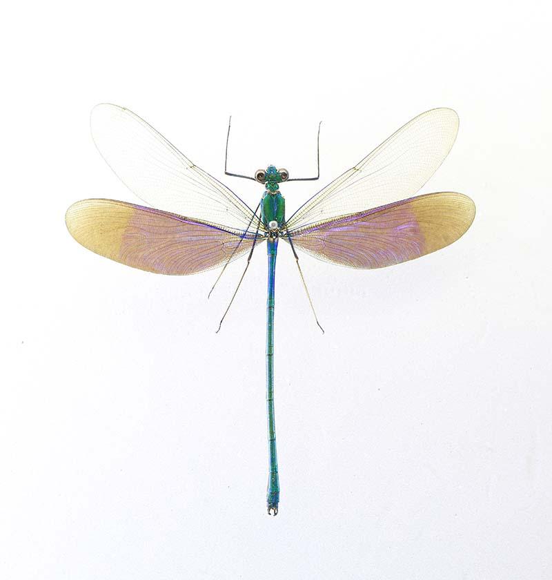 走進山東博物館—世界珍稀昆蟲標本展