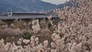 花開成海 青島這條地鐵正在詩和遠方中穿行