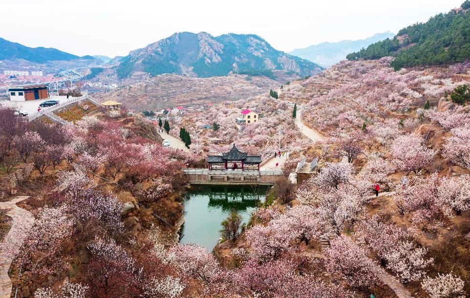 青島嶗山大嶗櫻桃谷花海童話般美麗