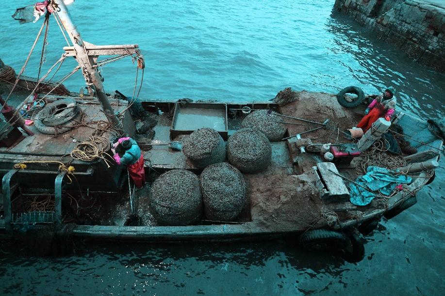 青島膠州灣海星數量呈減少趨勢 漁民恢復種苗投放