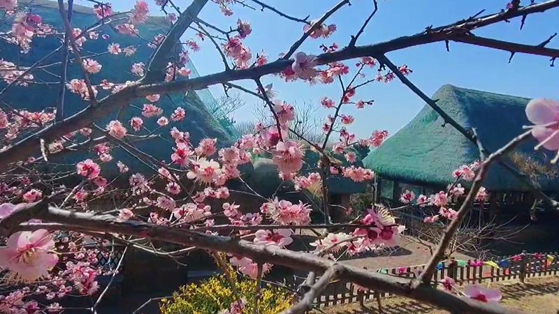 威海大乳山:開啟踏青賞花之旅