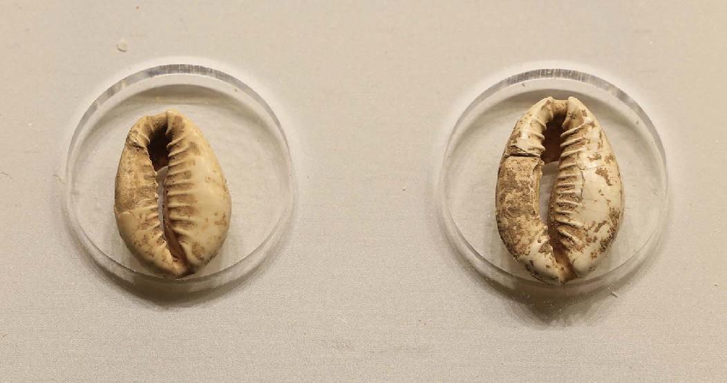 走進孔子博物館 探秘古代絲綢之路上的貨幣