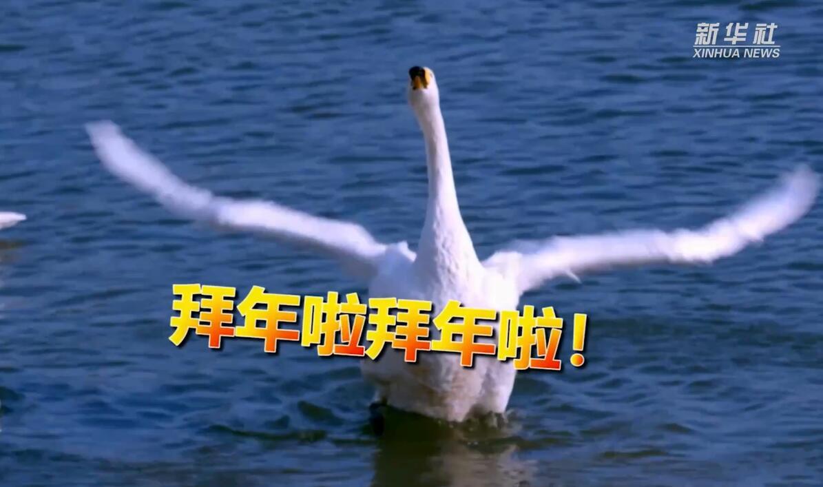 """季录山东 """"鹅""""给您拜年!"""