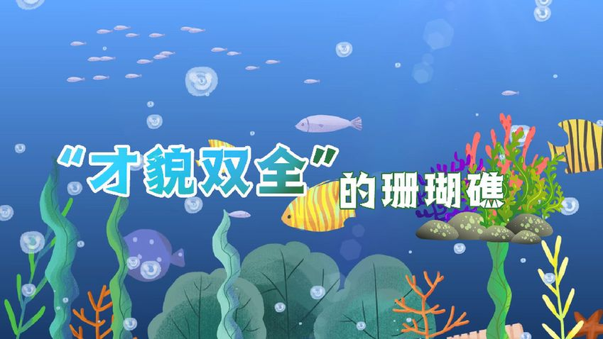 """世界海洋日:""""才貌雙全""""的珊瑚礁"""